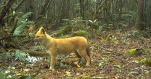 珍贵视频!红外相机监测到西藏多种珍稀野生动物