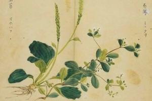 流芳:《楚辞》中的植物