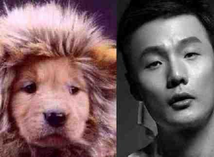 杨丞琳晒李荣浩与柴犬对比图 盘点李荣浩撞脸过的动物们