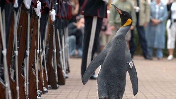 企鹅也能当将军?俄媒介绍在军队服役的动物们