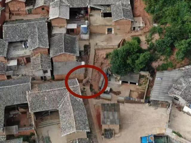 """野象在村莊中。圖源""""云南政法"""""""