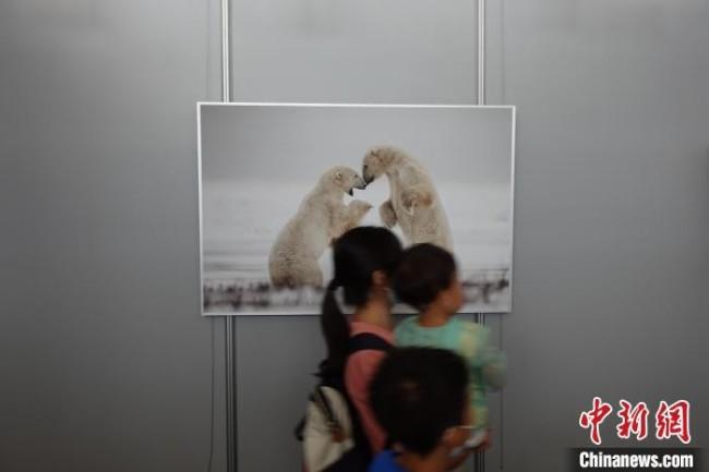 观众走过国家动物博物馆内一幅动物摄影作品。郝凌宇 摄