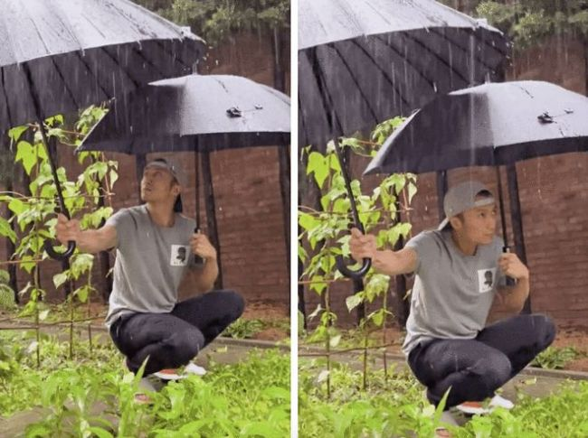 谢霆锋雨中给农作物打伞被骂作秀 网友:儿子都不管