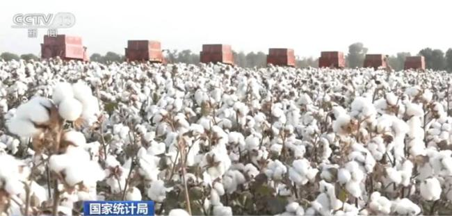 2020年全国棉花产量591万吨 比上年增长0.4%