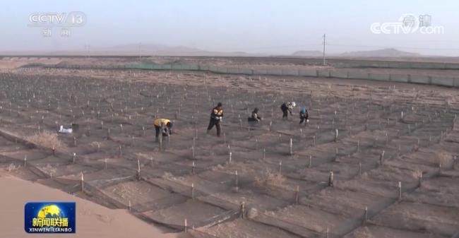 【新春走基层】沙漠深处的治沙工