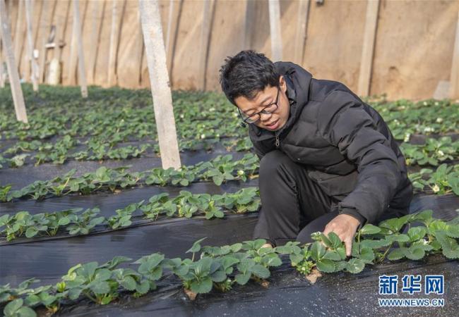 山西原平:设施农业富农家