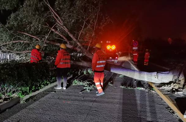 北京大风致41棵树倒伏